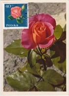 POLOGNE Carte Maximum - Rose Monique - Maximumkarten