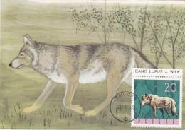 POLOGNE Carte Maximum - Loup - Maximumkarten