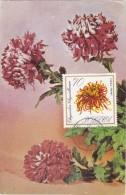 POLOGNE Carte Maximum - Chrysanthème - Maximumkarten