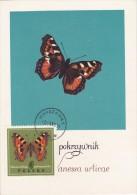 POLOGNE Carte Maximum - Vanessa Urticae - Maximumkarten