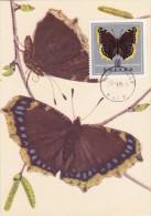 POLOGNE Carte Maximum - Vanessa Antiopa - Maximumkarten