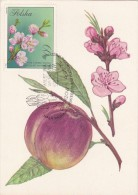 POLOGNE Carte Maximum - Prunus Persica - Maximumkarten