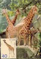 POLOGNE Carte Maximum - Girafe - Maximumkarten