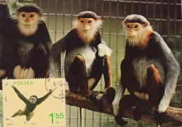 POLOGNE Carte Maximum - Gibbon - Maximumkarten
