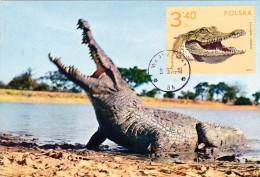 POLOGNE Carte Maximum - Crocodile - Maximumkarten