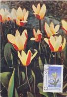 URSS Carte Maximum - Tulipe - Russie & URSS