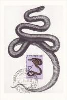 RWANDA Carte Maximum - Dasypeltis - Autres