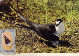 SAINTE LUCIE Carte Maximum - Sterna Fuscata - St.Lucie (1979-...)
