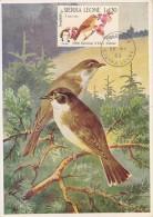 SIERRA LEONE Carte Maximum - Sylvia Borin - Sierra Leone (1961-...)