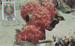 SURINAM Carte Maximum - Dominion - Surinam