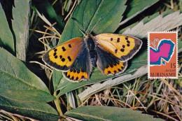 SURINAM Carte Maximum - Le Papillon - Surinam