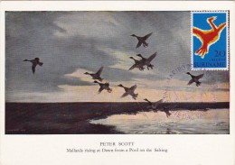 SURINAM Carte Maximum - L'Oiseau - Surinam