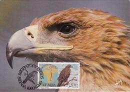 AFRIQUE SUD VENDA Carte Maximum - Aquila Nipalensis - Venda
