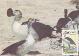 AFRIQUE SUD VENDA Carte Maximum - Sarkidiornis Melanotos - Venda