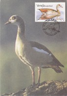 AFRIQUE SUD VENDA Carte Maximum - Alopochen Aegyptiacus - Venda