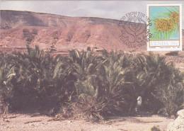 AFRIQUE SUD VENDA Carte Maximum - Phoenix Reclinata - Venda
