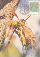 AFRIQUE SUD VENDA Carte Maximum - Halleria Lucida - Venda