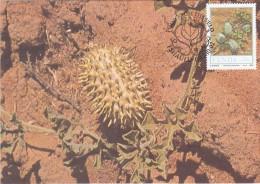 AFRIQUE SUD VENDA Carte Maximum - Cucumis Africanus - Venda