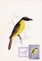 VENEZUELA Carte Maximum - Pitangus Sulphuratus - Venezuela