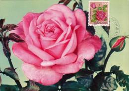 YOUGOSLAVIE Carte Maximum - Rose - Cartes-maximum