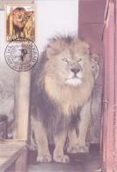 YOUGOSLAVIE Carte Maximum - Lion Et Lionne - Cartes-maximum