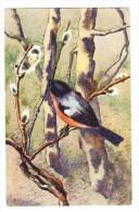 AK Künstler Mili Weber Vogel Im Baum Ges. 6.11.1941 Nach Bern - Illustrators & Photographers
