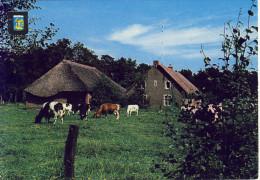 Sint-Job-in-´t-Goor De Grote Vraeghoeve  JvdB P/113-2 - Brecht