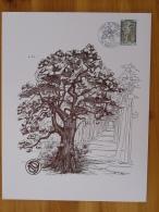 Gravure De Sainson Forêt De Tronçais Montluçon Allier 1976 (21x27cm) - Bomen