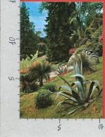 CARTOLINA NV ITALIA - Lago Di COMO - Nel Parco Di Villa Carlotta - 10 X 15 - Como