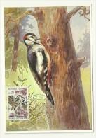 OISEAU / PIC EPEICHE  = MONACO 1962  N° 585  = CARTE MAXIMUM - Piciformes (pájaros Carpinteros)