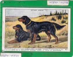 SETTERS GORDON CHIEN - Cani