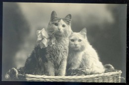 Cpa Carte Photo -- 2 Chats --      SEPT19 - Chats