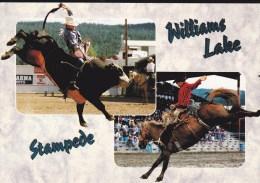 Rodeo Action, Stampede, Bull Riding, Saddle Bronc, WILLIAMS LAKE, BC, CARIBOO, BRITISH COLUMBIA, CANADA, Postcard, Carte - British Columbia