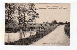 Sept15  2770646    Lyons La Forêt   Paturages De La Ferme De Hideuse  Route De Lyons - Lyons-la-Forêt