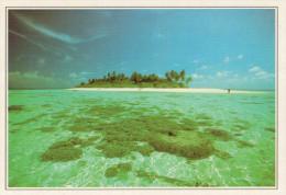 MALDIVE-  RIHIVELI:   SCOGLI  CORALLINI            (NUOVA CON DESCRIZIONE DEL SITO SUL RETRO) - Maldives
