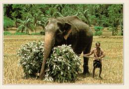 AKURESSA:  UN  ELEFANTE  E IL SUO  DOMATORE             (NUOVA CON DESCRIZIONE DEL SITO SUL RETRO) - Sri Lanka (Ceylon)