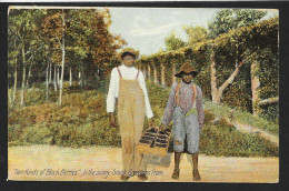 ´Two Kinds Of Black Berries´ Black Boys & Black Berries Unused C1910s STK#93185 - Black Americana