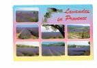 Lavandes En Provence - Cigale - - Blumen