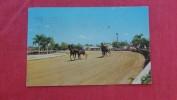 Trotter Horse Racing  Ben White Raceway Florida> Orlando  --------------   ref 1975