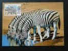 Carte Maximum Card Zèbre Zebra N-Zelande Ref 71792 - FDC