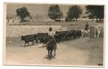 Corridas De Toros -SPAIN / ESPAÑA - Old Postcard - Arriada De TOROS - Sello Paticular  FOTO BALDOMERO - Corrida
