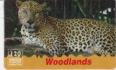 France - Woodlands - Leopard - France