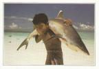 Maldives - Requin à Pointe Blanche - Les Explications Intéréssantes Sont Au Verso De Cette Carte Fiche - Maldives