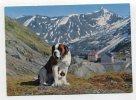 SWITZERLAND - AK 240723 Col Du Grand Saint-Bernhard - Le Chien Barry Et Son Petit Chiot - VS Valais