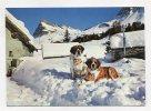 SWITZERLAND - AK 240726 Bernhardiner Hunde - Einsatzbereit ! - VS Valais