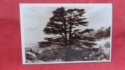 RPPC   > Lebanon  The Cedars The Flag    -ref 1987