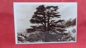 RPPC   > Lebanon  The Cedars The Flag    -ref 1987 - Lebanon