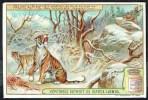 LIEBIG  - FR - 1 Chromo - S.958 - N° 1  - Lumières Et Luminaires - Faune Alpine  - Tigre Sibérien. - Liebig