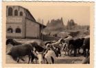 FOTOGRAFIA - MILITARI - CAMPO INVERNALE DI LEVICO VETRIOLO - TRENTO - 1942 - Formato Cm.11,5 X 8 Circa - Vedi Retro - War, Military