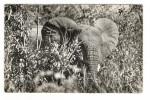 NIGER  /  LA  FAUNE  DU  WATERBUCK  :  ELEPHANT  /  Collection  MOUREN , Niamey  N° 7 - Niger